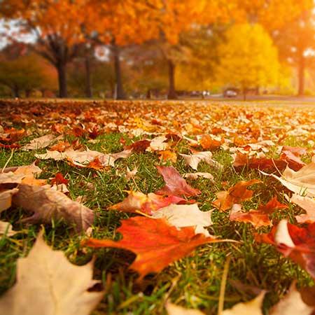 Urlaub Herbst Rügen Mönchgut